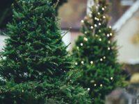 7 dingen die je in de kerstvakantie kunt doen