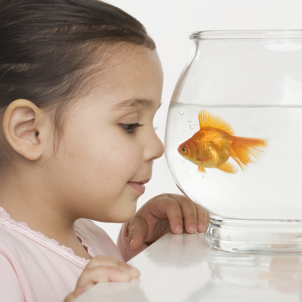 Young girl watching a fishbowl