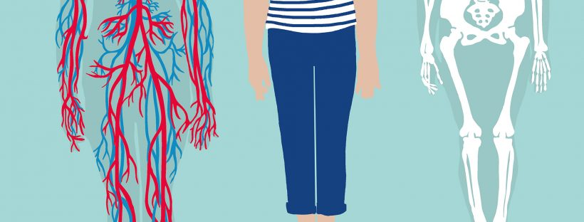Review: Anatomie. Zo zag je het menselijk lichaam nog nooit
