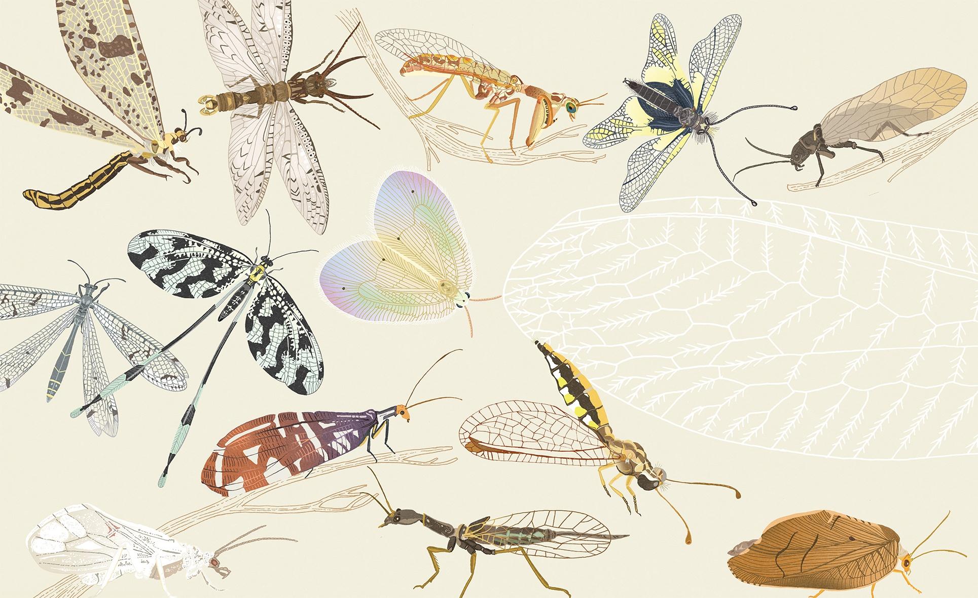 Review: Insectenrijk: een schatkamer vol wonderlijke wezens
