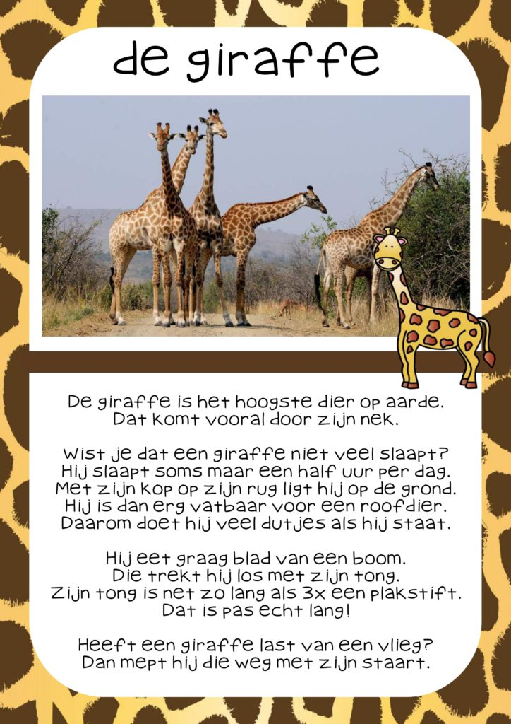 Thema dierentuin
