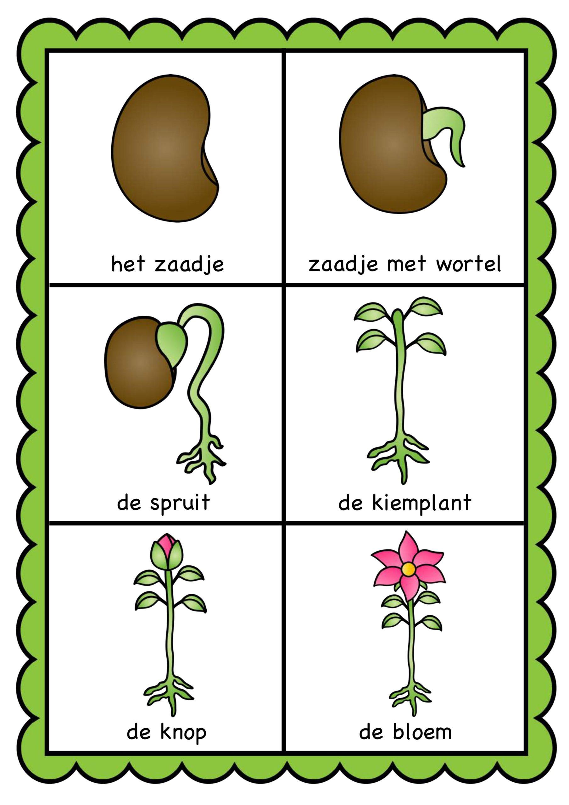 Thema tuincentrum