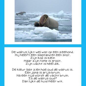 Teksten thema Noordpool