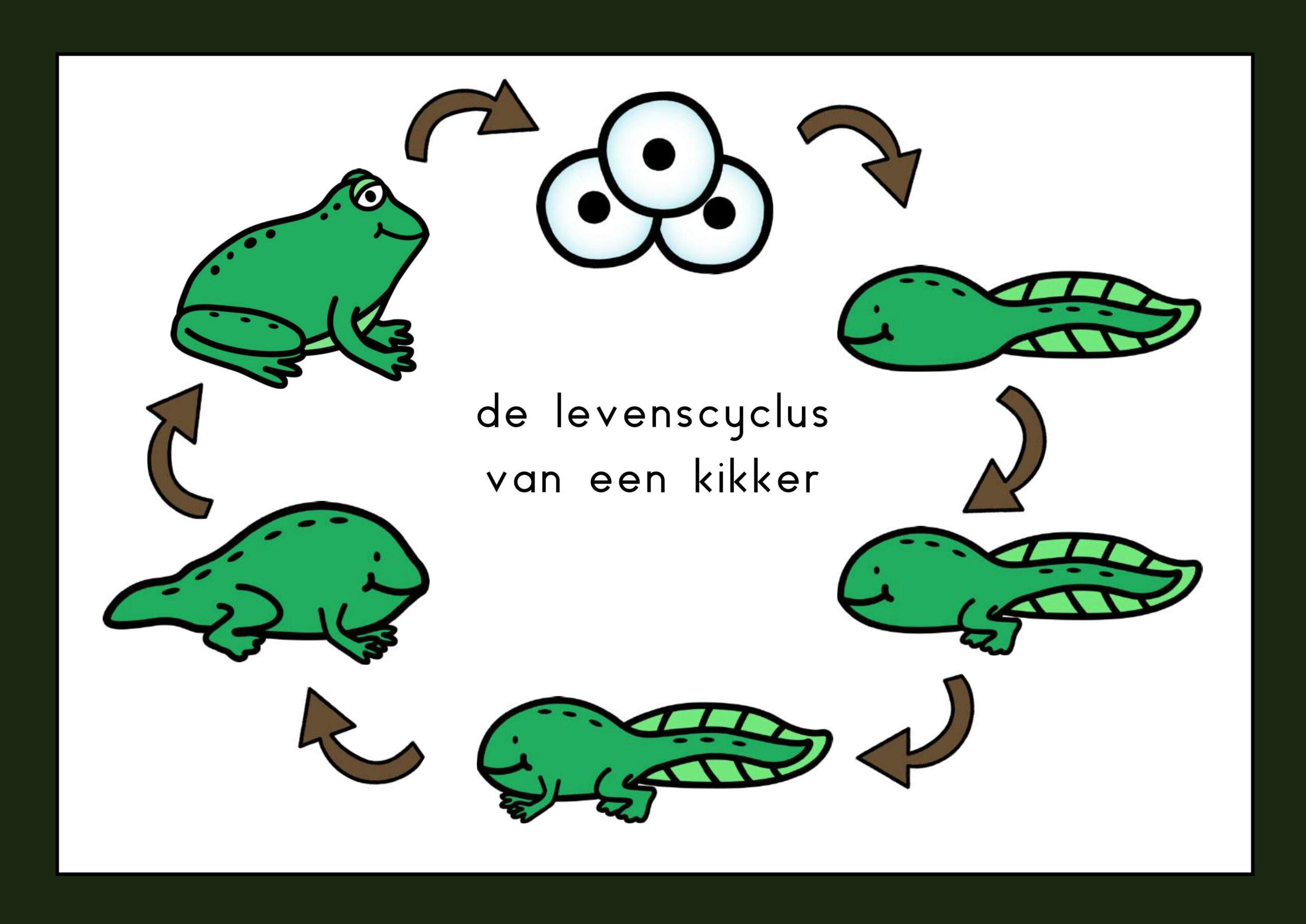 de levenscyclus van een kikker
