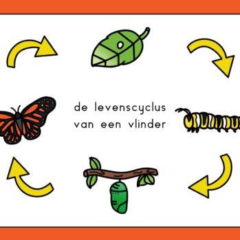 Levenscyclus vlinder